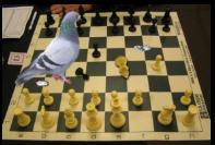 [Image: pigeon.jpg]